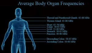 bodyFrequency